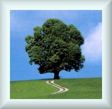 Click here to go to the New Covenant Tree